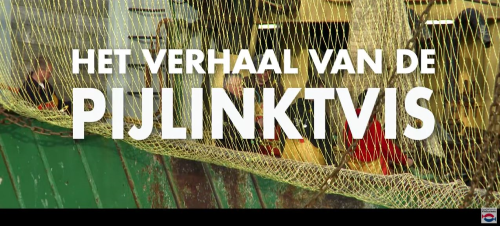 Pijlinktvis video Nederlands Visbureau